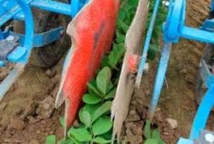 Talerze chroniące uprawę