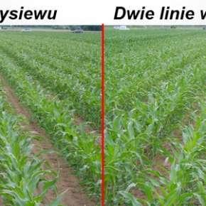 Porównanie wysiewu kukurydzy