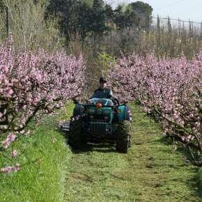 kompaktowy ciągnik sadowniczy arbos 4000 q w sadzie