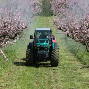 Kabinowy, przestronny i komfortowy traktor specjalistyczny arbos 4000 q w sadzie