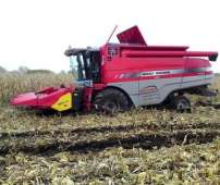Kombajn Massey Ferguson Centora w pracy na polu kukurydzy zakopany w rozmokłym terenie