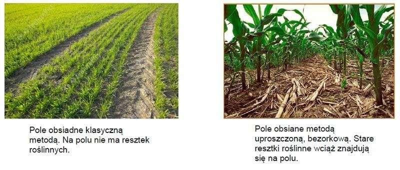 Porównanie uprawy klasycznej i bezorkowej