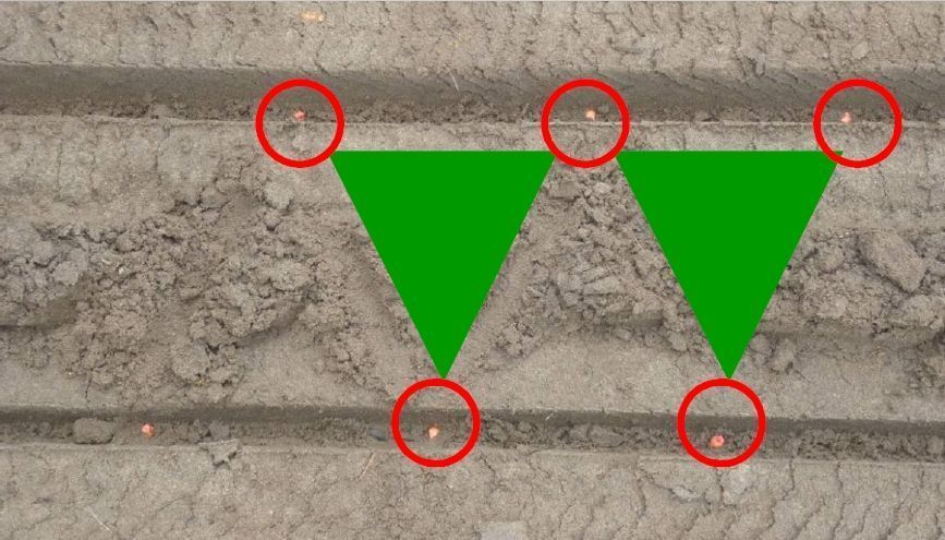 """Wysiew kukurydzy """"magiczny trójkąt"""" czyli 2 linie wysiewu na każdym rzędzie"""