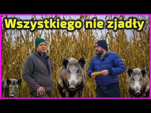 Embedded thumbnail for Czy Słomek zostanie w gospodarstwie rodziców? Tata jest głównym Szefem, ale Junior ma już plan