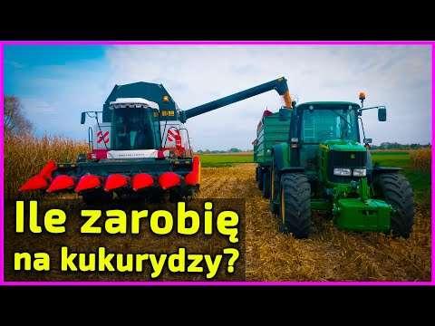 Embedded thumbnail for 85 000 ziaren na hektar kukurydzy Dało 12 ton 450 zł za tonę